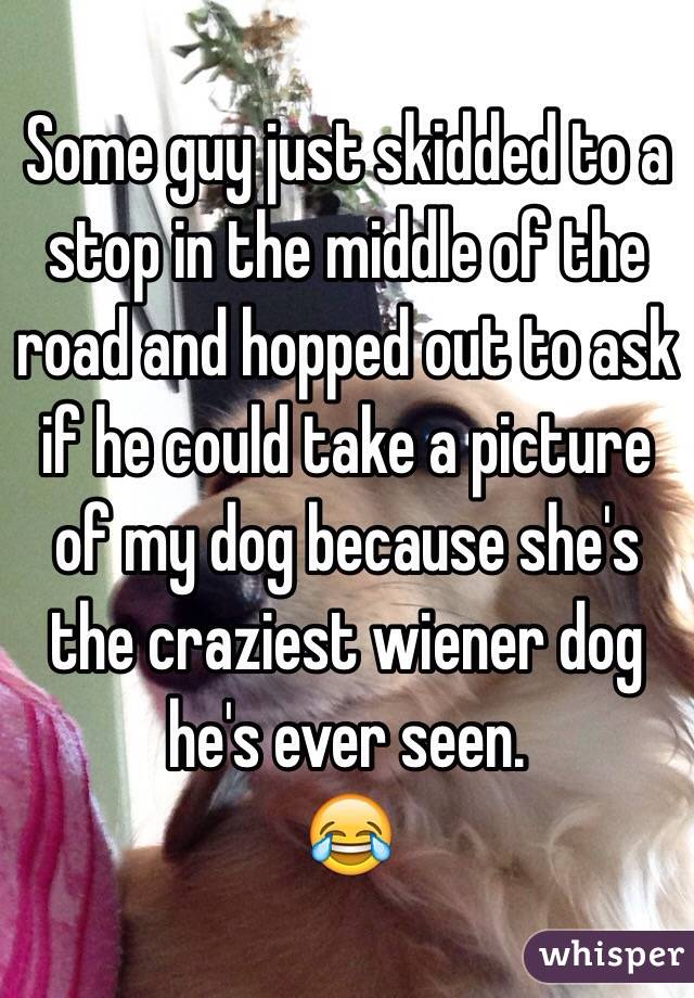 Some guy just skidded to a stop in the middle of the road and hopped out to ask if he could take a picture of my dog because she's the craziest wiener dog he's ever seen.  😂