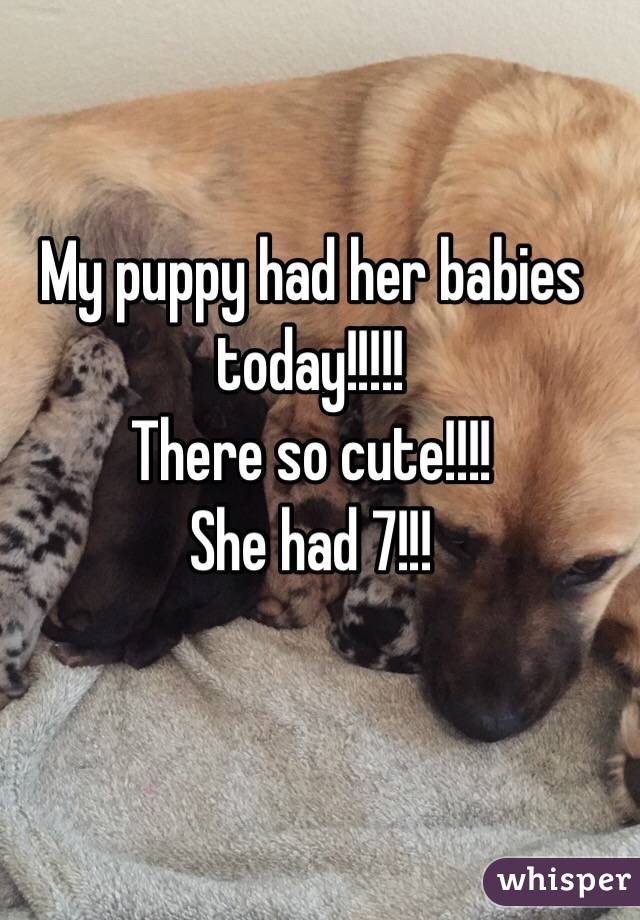 My puppy had her babies today!!!!! There so cute!!!! She had 7!!!