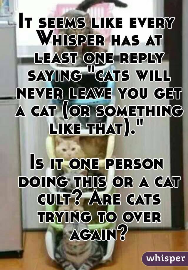 """It seems like every Whisper has at least one reply saying """"cats will never leave you get a cat (or something like that).""""   Is it one person doing this or a cat cult? Are cats trying to over again?"""