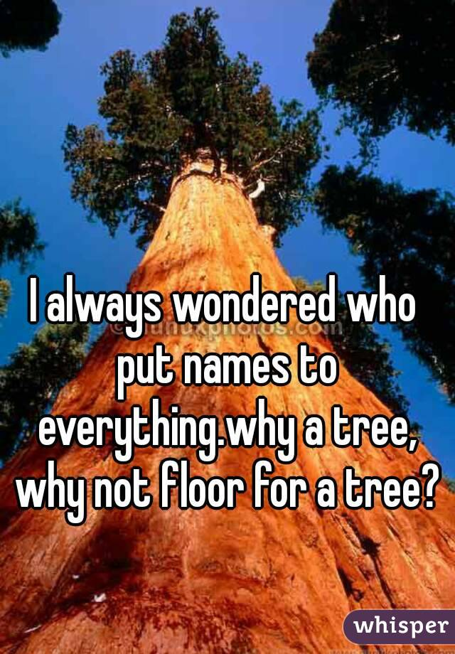 I always wondered who put names to everything.why a tree, why not floor for a tree?
