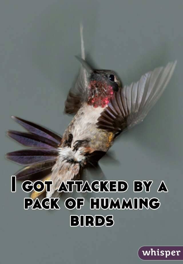 I got attacked by a pack of humming birds