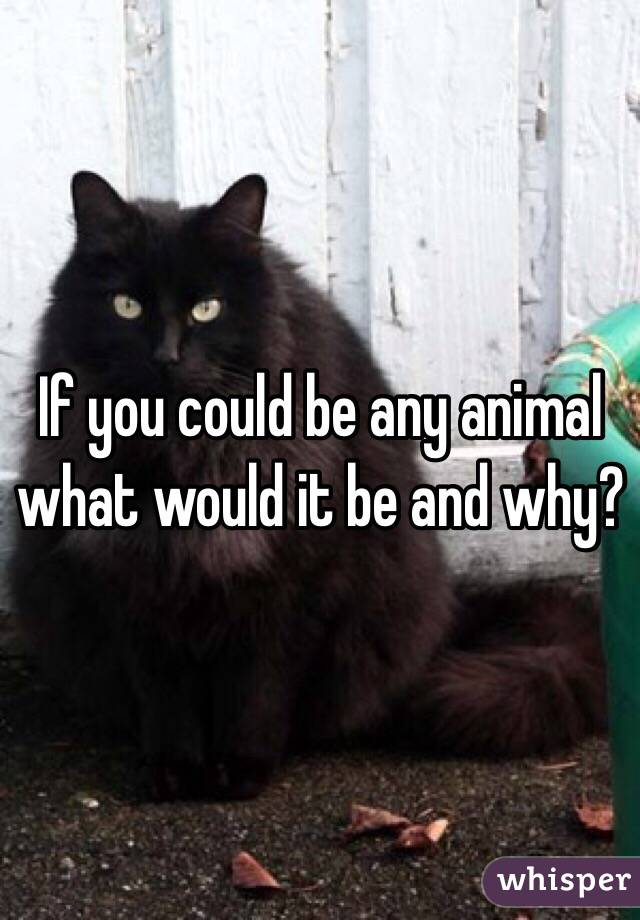 If you could be any animal what would it be and why?