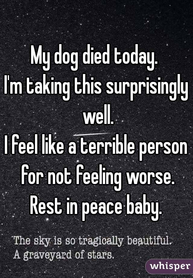 my dog died today i m taking this surprisingly well i feel like a