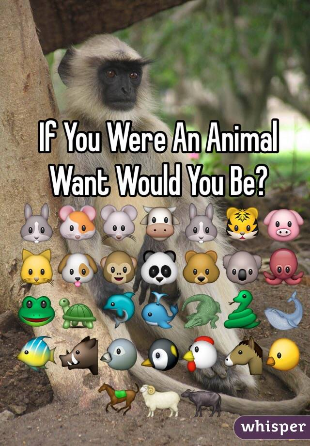 if you were an animal what would you be