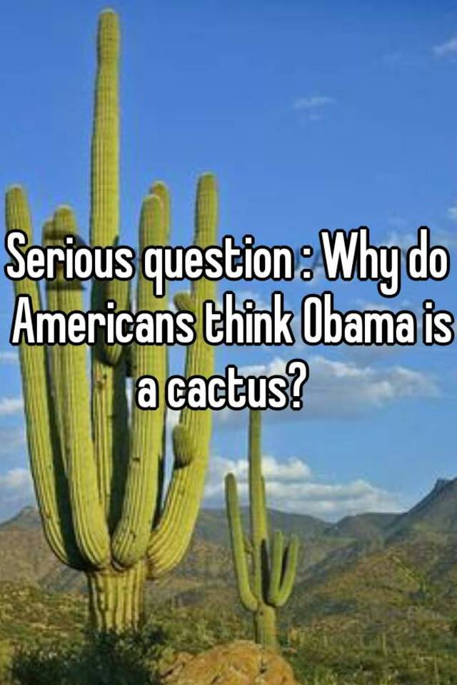Americans think obama is a cactus