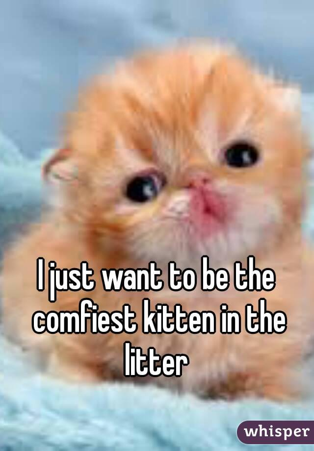I just want to be the comfiest kitten in the litter