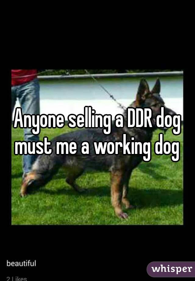 Anyone selling a DDR dog must me a working dog