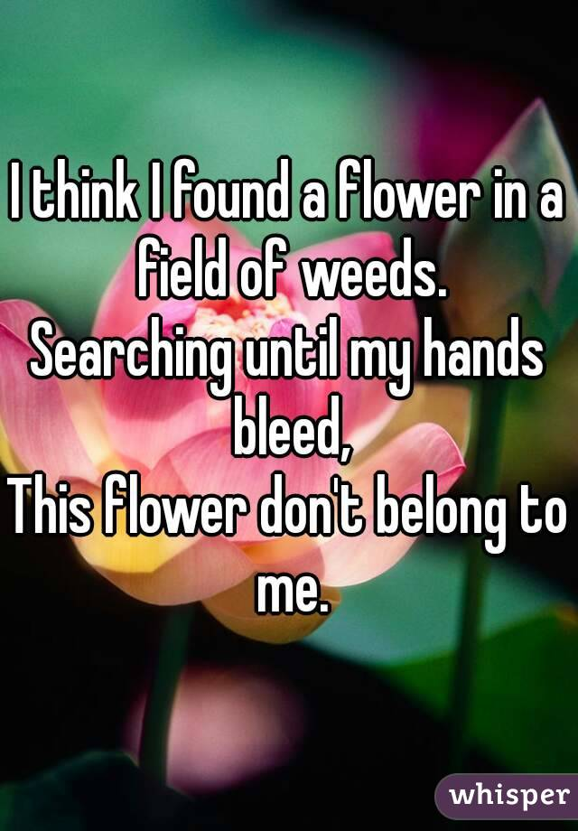 I think I found a flower in a field of weeds. Searching until my hands bleed, This flower don't belong to me.