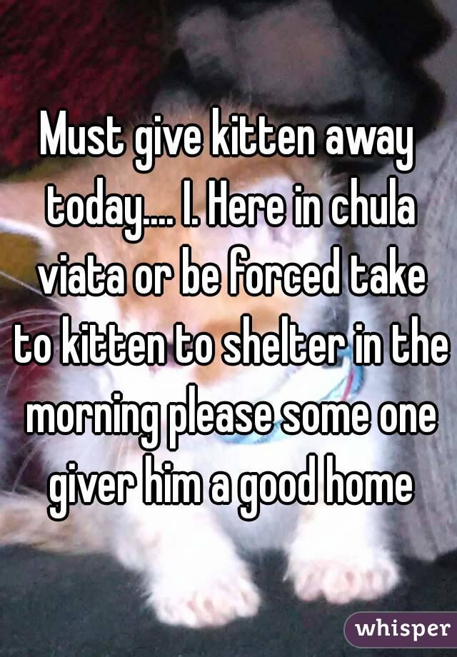 Must give kitten away today.... I. Here in chula viata or be forced take to kitten to shelter in the morning please some one giver him a good home