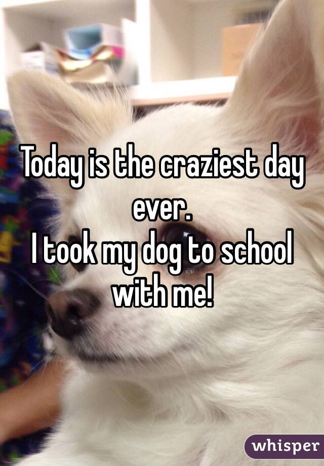 Today is the craziest day ever. I took my dog to school with me!