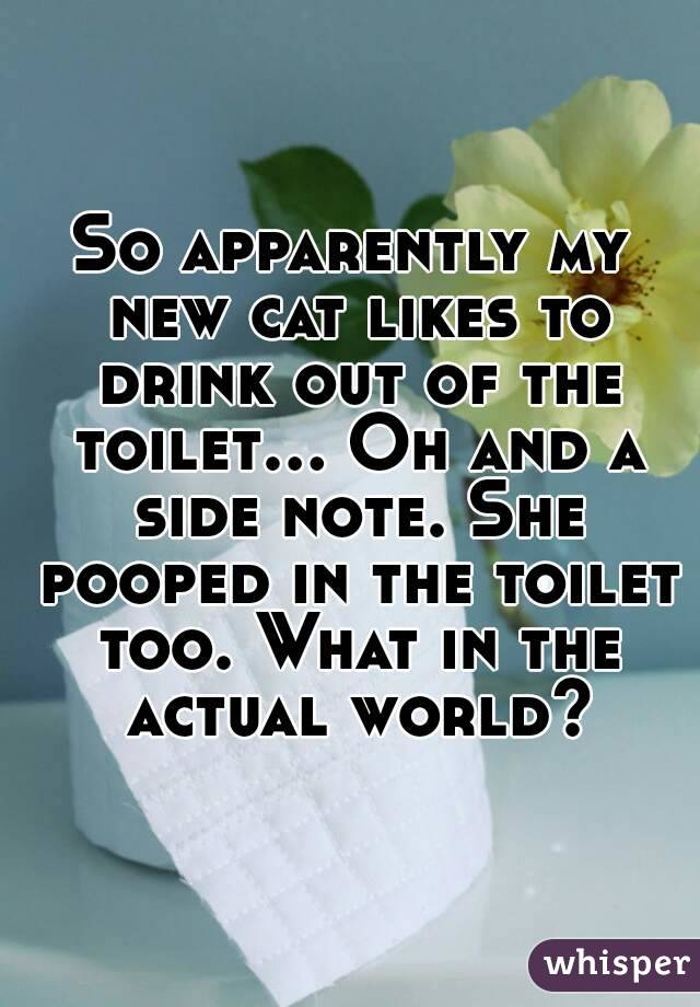 So apparently my new cat likes to drink out of the toilet... Oh and a side note. She pooped in the toilet too. What in the actual world?