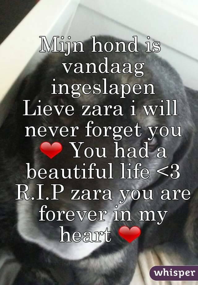 Mijn Hond Is Vandaag Ingeslapen Lieve Zara I Will Never Forget You Had A
