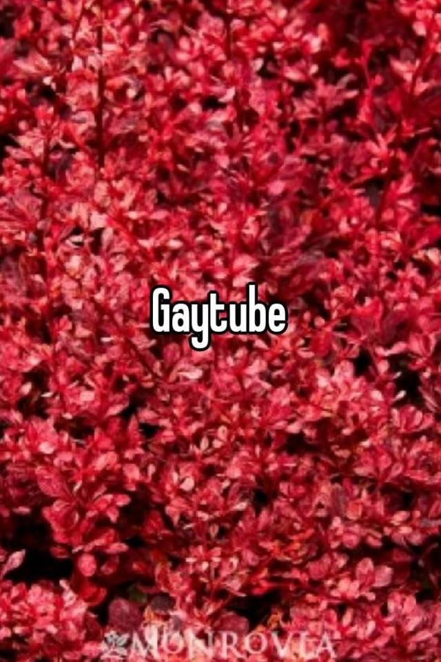 Gaytube red