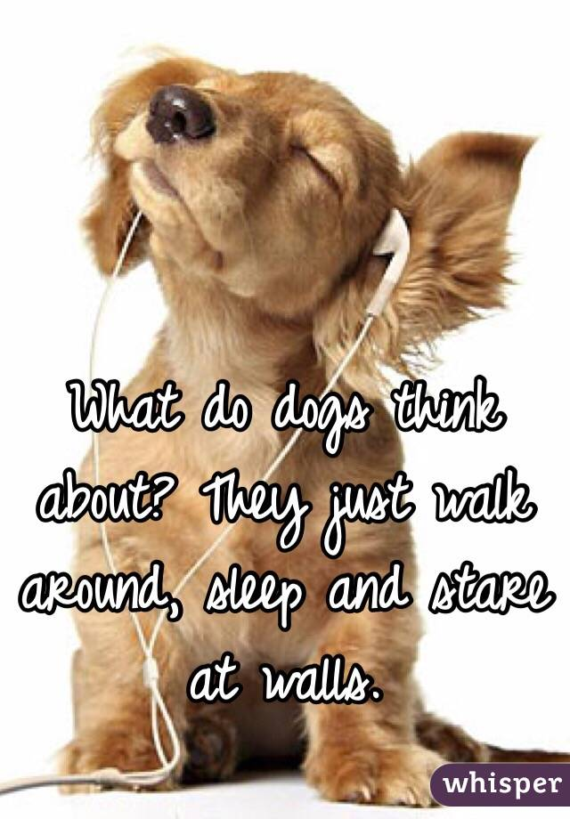 what do dogs think about