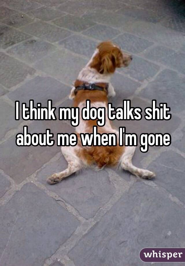 I think my dog talks shit about me when I'm gone
