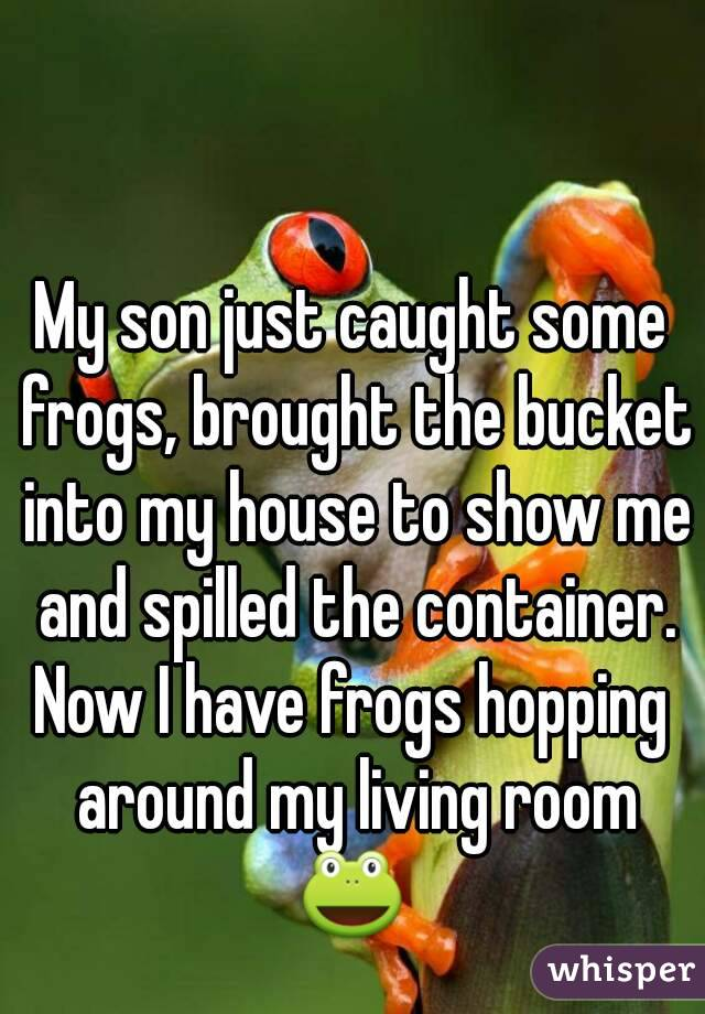 My son just caught some frogs, brought the bucket into my house to show me and spilled the container. Now I have frogs hopping around my living room 🐸