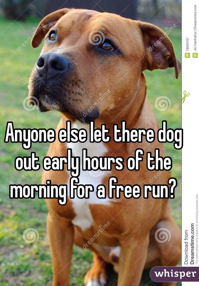 Anyone else let there dog out early hours of the morning for a free run?