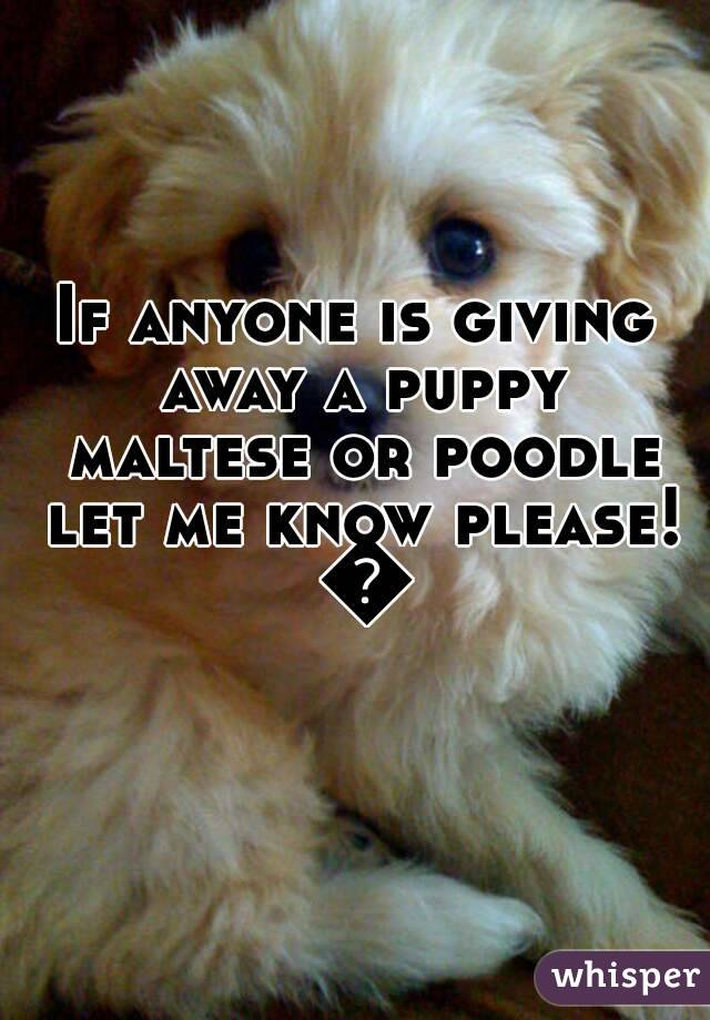 If anyone is giving away a puppy maltese or poodle let me know please! 😧