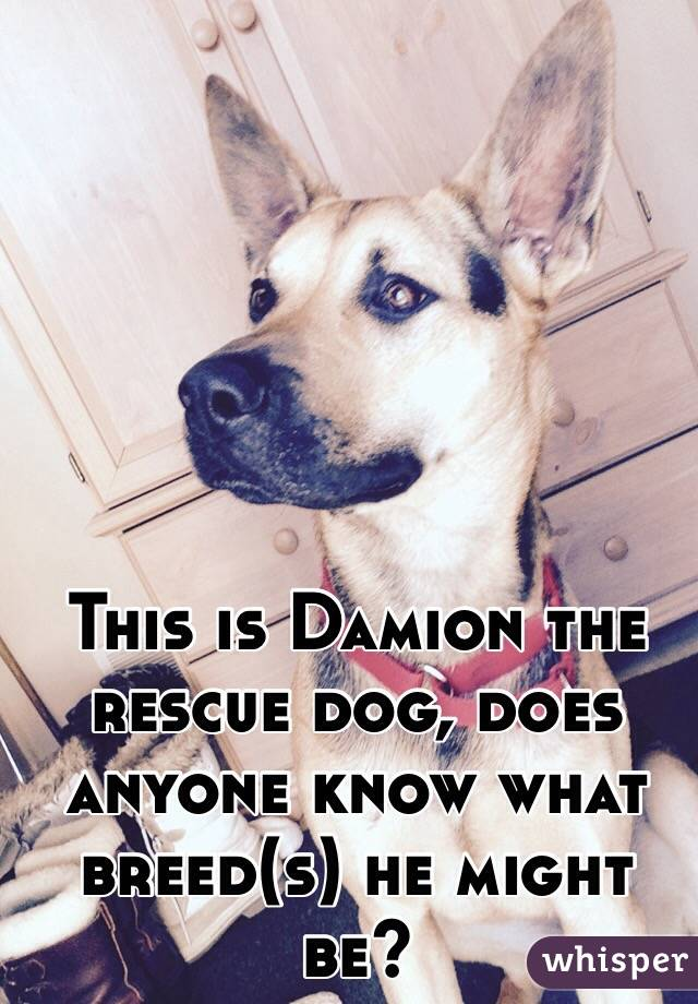 This is Damion the rescue dog, does anyone know what breed(s) he might be?