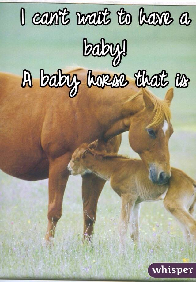I can't wait to have a baby!  A baby horse that is