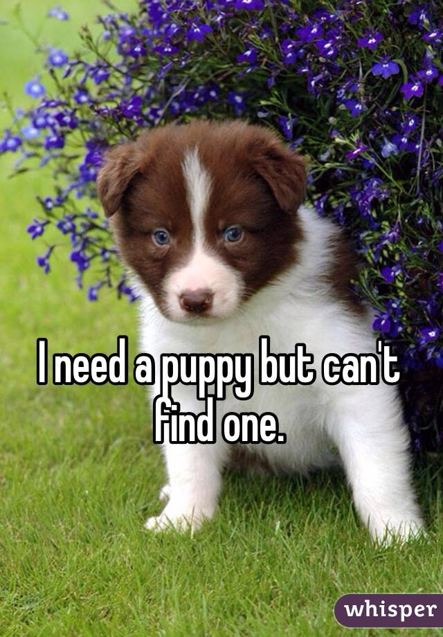 I need a puppy but can't find one.