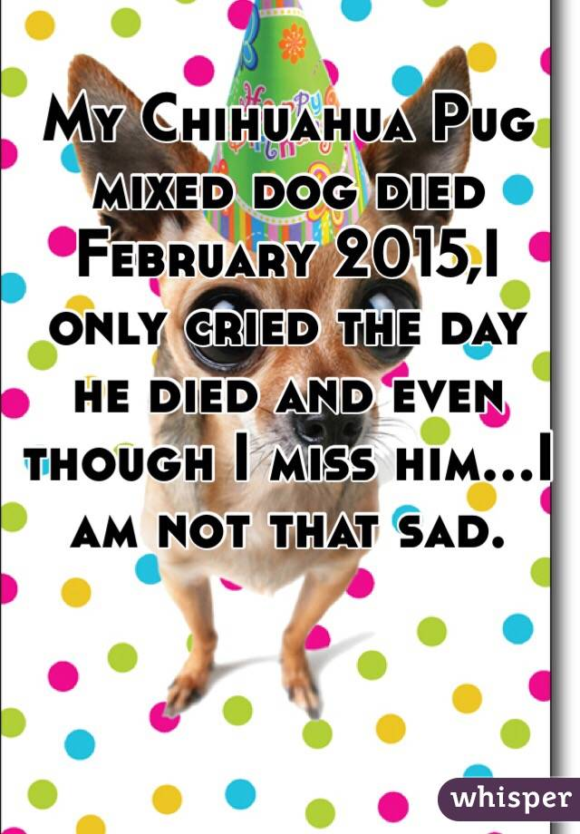 My Chihuahua Pug mixed dog died February 2015,I only cried the day he died and even though I miss him...I am not that sad.