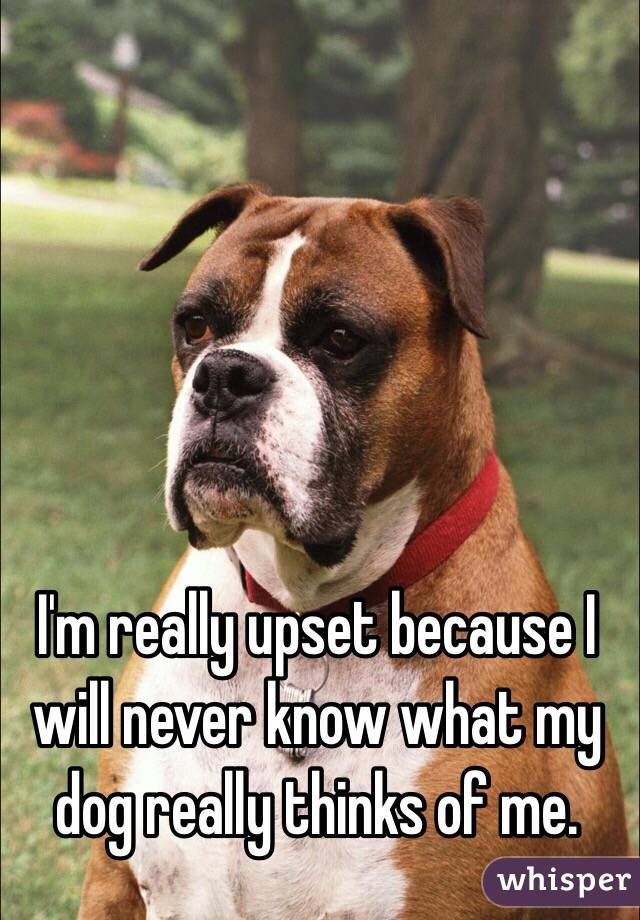 I'm really upset because I will never know what my dog really thinks of me.