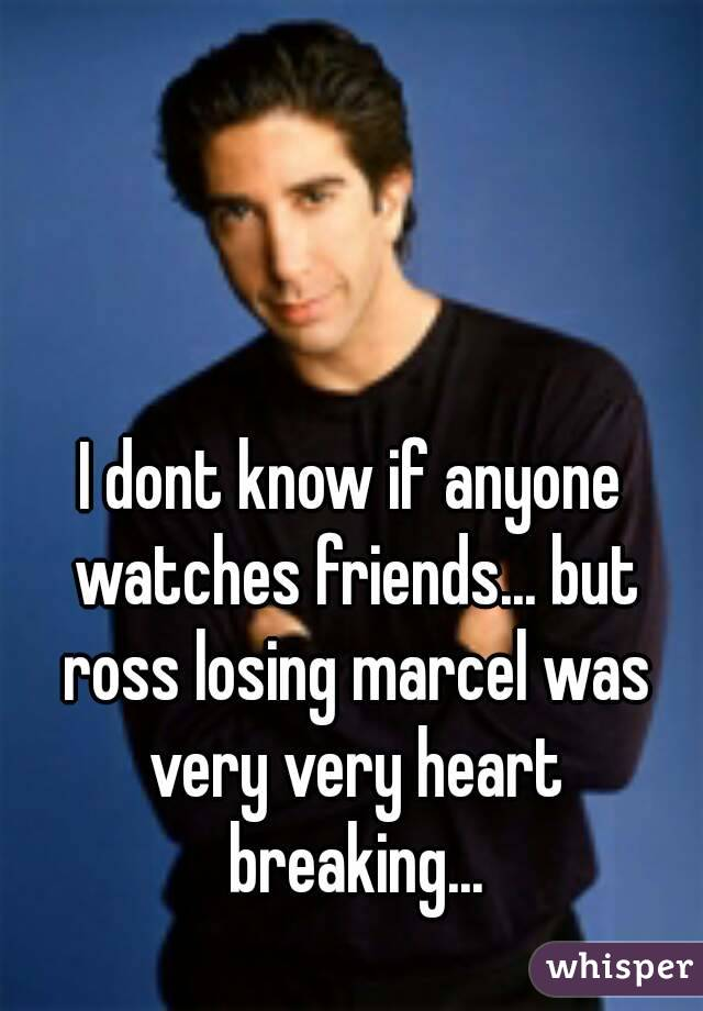 I dont know if anyone watches friends... but ross losing marcel was very very heart breaking...