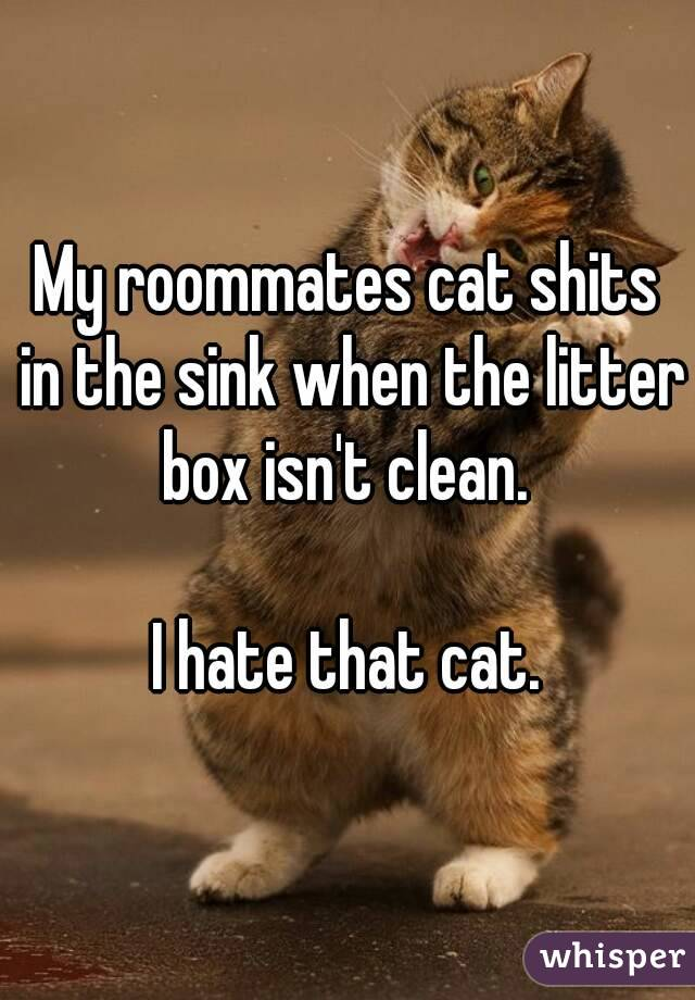 My roommates cat shits in the sink when the litter box isn't clean.   I hate that cat.
