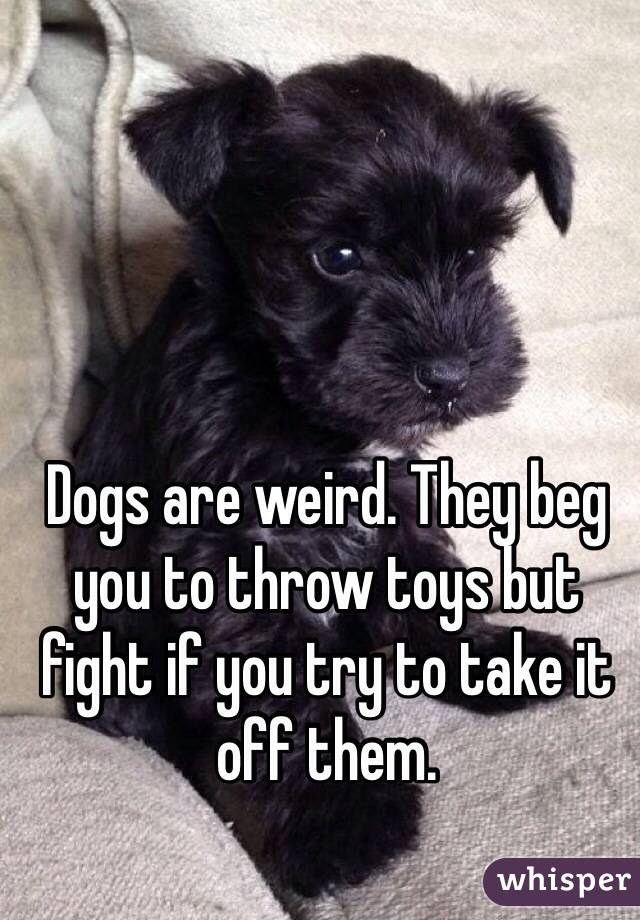 Dogs are weird. They beg you to throw toys but fight if you try to take it off them.