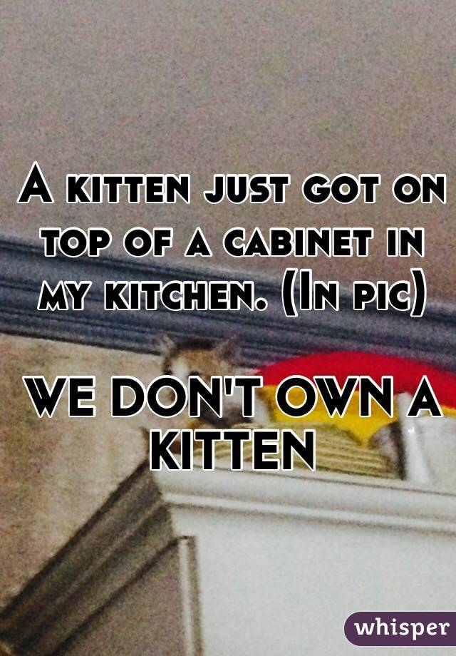 A kitten just got on top of a cabinet in my kitchen. (In pic)  WE DON'T OWN A KITTEN