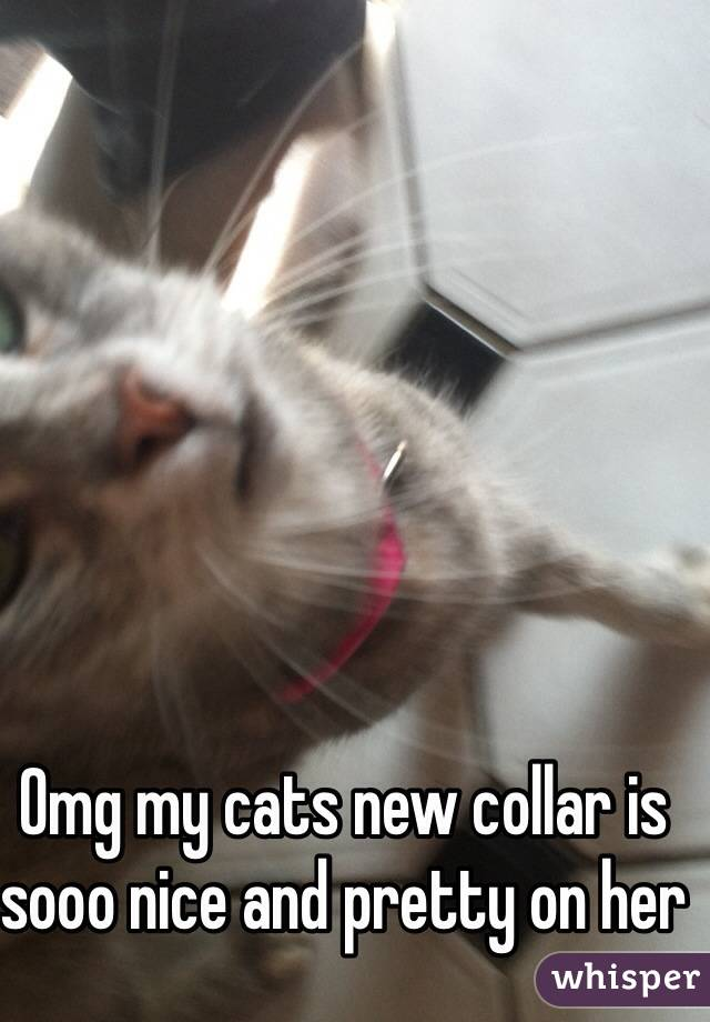 Omg my cats new collar is sooo nice and pretty on her