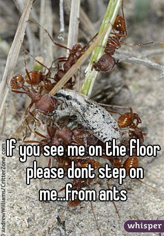 If you see me on the floor please dont step on me...from ants
