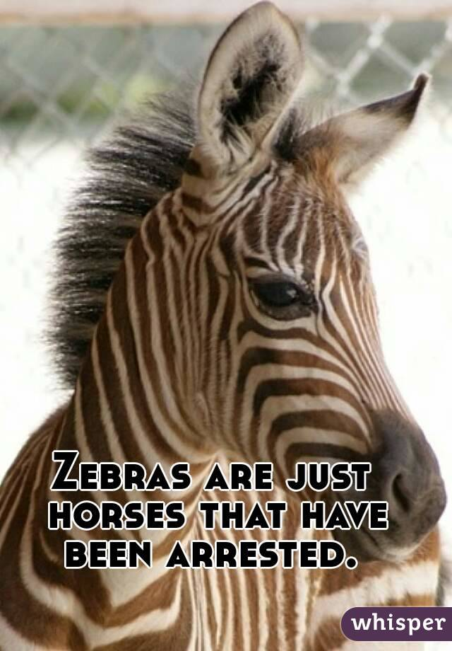 Zebras are just horses that have been arrested.