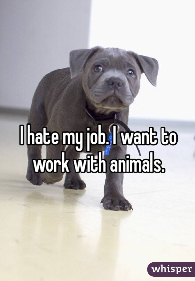 I hate my job. I want to work with animals.