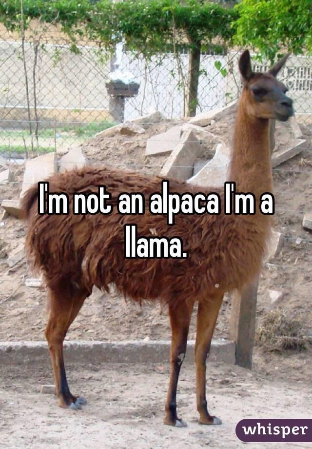 I'm not an alpaca I'm a llama.
