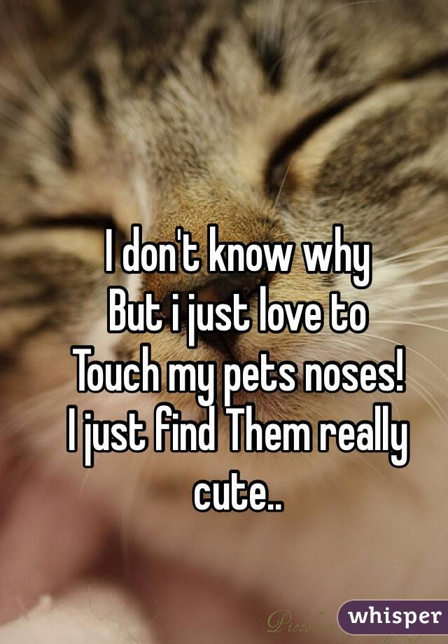 I don't know why But i just love to Touch my pets noses! I just find Them really cute..