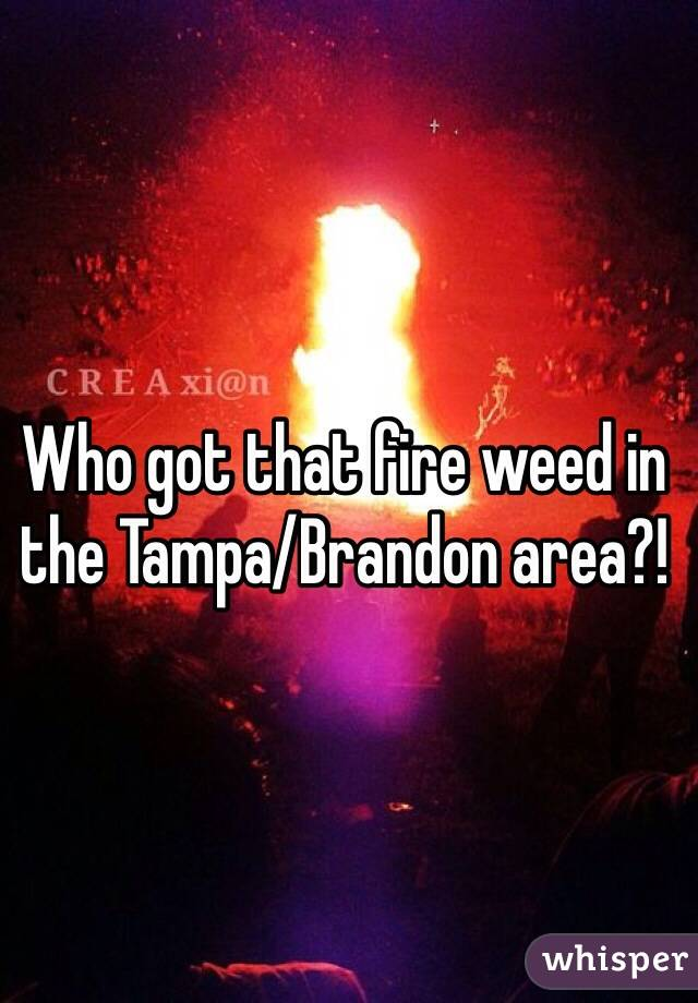 Who got that fire weed in the Tampa/Brandon area?!