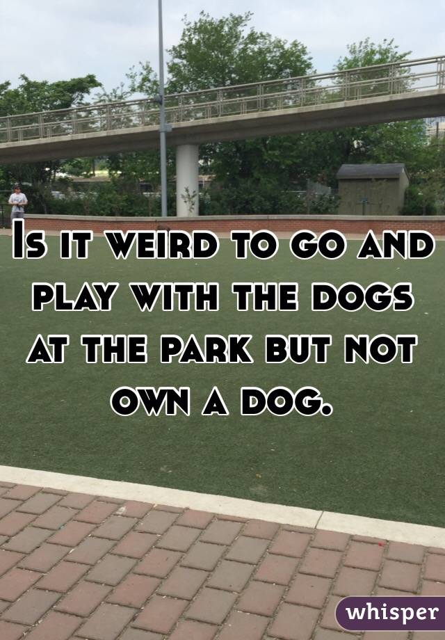 Is it weird to go and play with the dogs at the park but not own a dog.