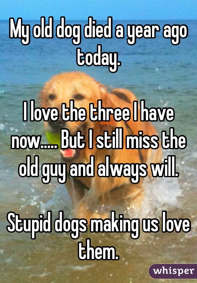 My old dog died a year ago today.  I love the three I have now..... But I still miss the old guy and always will.  Stupid dogs making us love them.