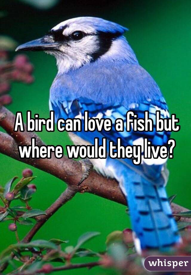 A bird can love a fish but where would they live?