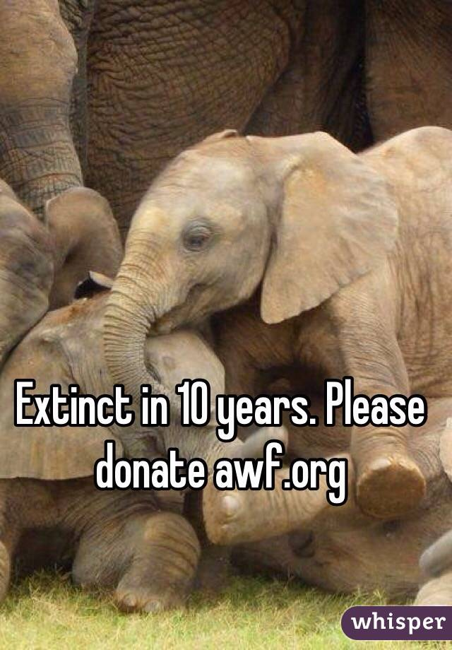 Extinct in 10 years. Please donate awf.org