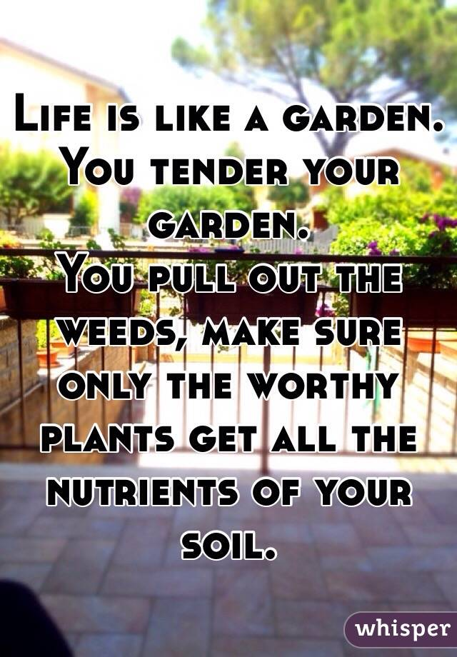 Life is like a garden. You tender your garden. You pull out the weeds, make sure only the worthy plants get all the nutrients of your soil.