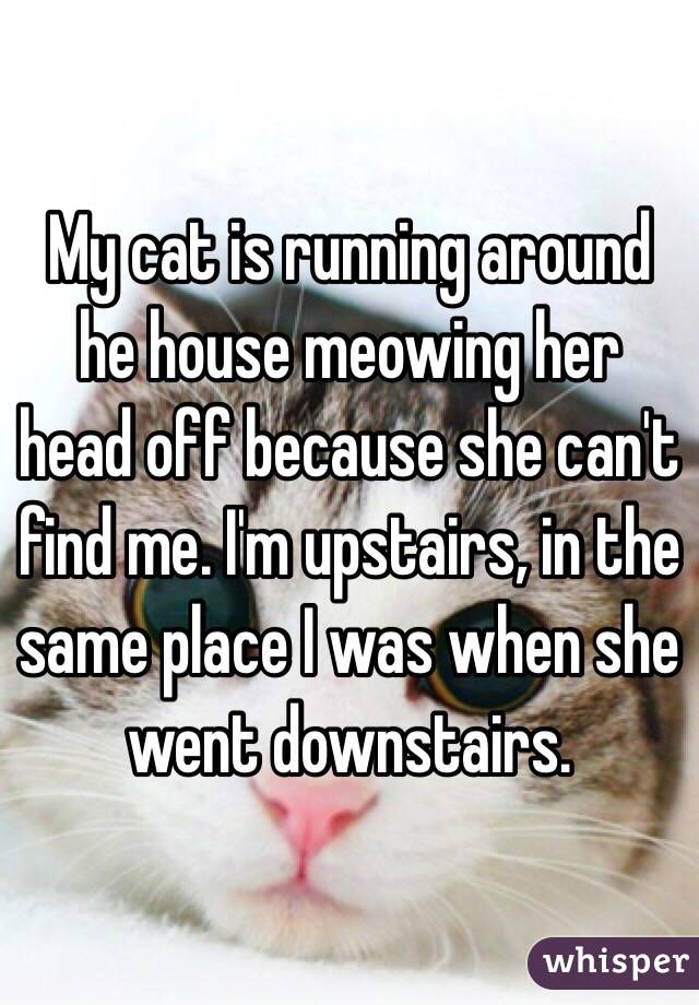 My cat is running around he house meowing her head off because she can't find me. I'm upstairs, in the same place I was when she went downstairs.