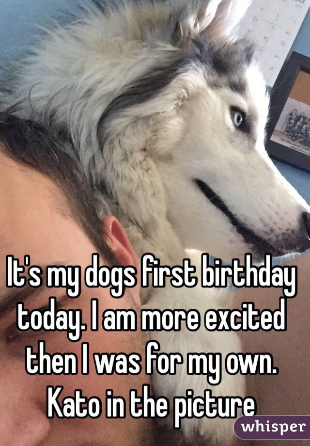 It's my dogs first birthday today. I am more excited then I was for my own. Kato in the picture