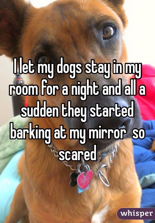 I let my dogs stay in my room for a night and all a sudden they started barking at my mirror  so scared