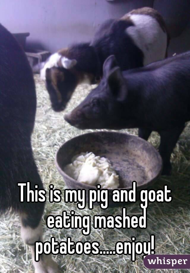 This is my pig and goat eating mashed potatoes.....enjoy!