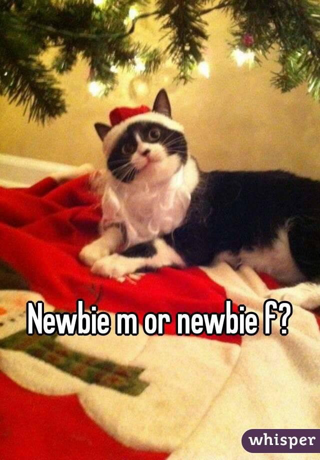 Newbie m or newbie f?