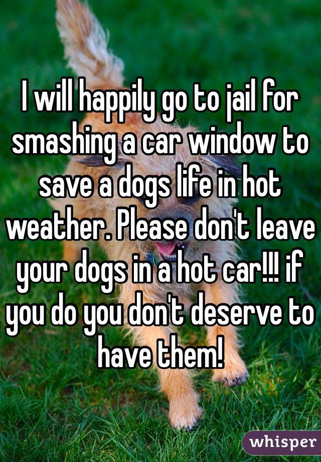 I will happily go to jail for smashing a car window to save a dogs life in hot weather. Please don't leave your dogs in a hot car!!! if you do you don't deserve to have them!