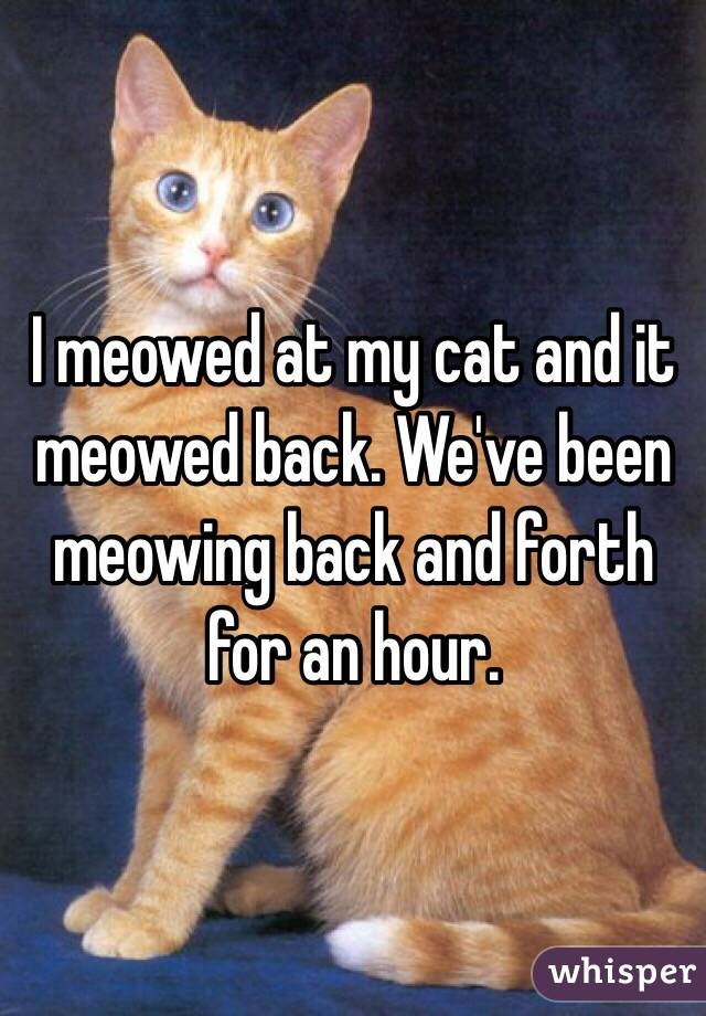 I meowed at my cat and it meowed back. We've been meowing back and forth for an hour.